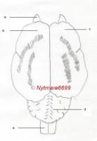 cerveau-dffc1