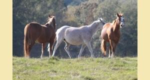 cheval retraite