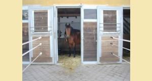cheval stabulation