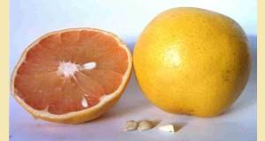 grapefruitpepins