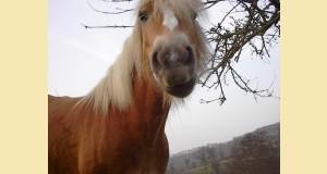 cheval peureux