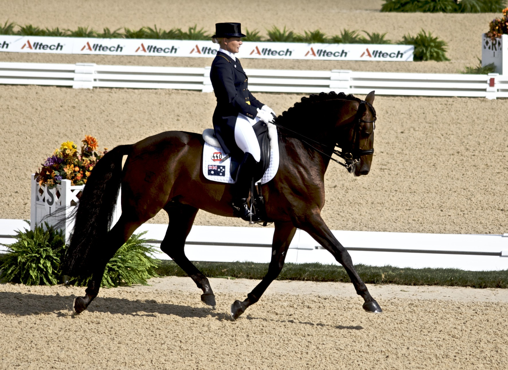 how to start a horse in dressage