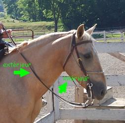 neck reining photo 2