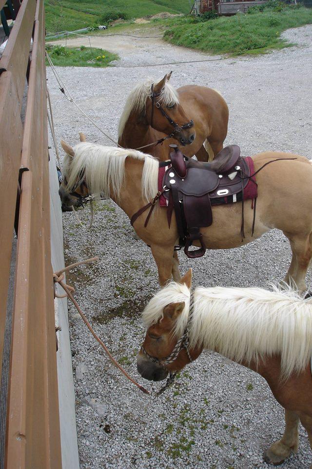 randonnée à cheval 4 par Lily rose