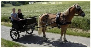 Attelage à un seul cheval