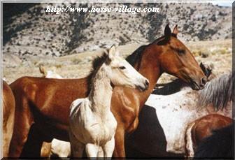Bordo Altravesado Wild Horse