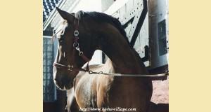 Rex ( aussi appelé mon gentil gros par Guido ) est mort en avril 2004 à l'âge de 30 ans . Il fût le premier cheval traité au gingembre en Allemagne : 1 an 1/2 de vie très agréable !