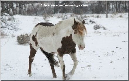 American Painted Mustang