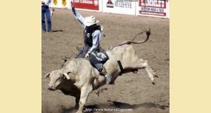 bullride1-80f65.jpg