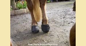 cavallo1.jpg