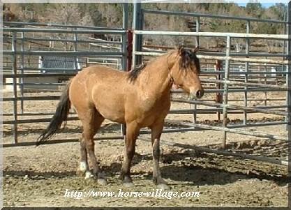 Cedar Mountain Horse