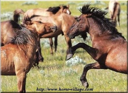 Gila Wild Horse