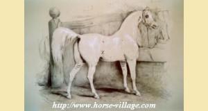 Dahmani 1850 (Victor Adam)