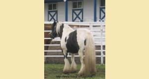 stallion-367ca.jpg