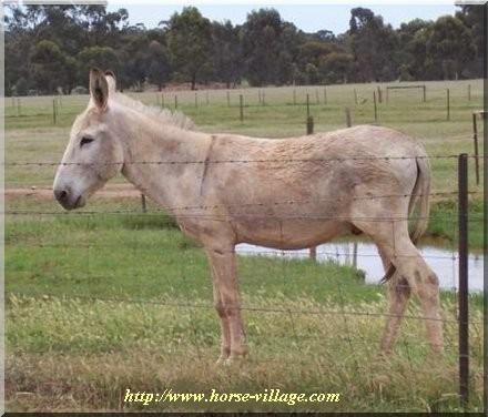 Teamster Donkey