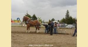 tir_de_chevaux1-44dfb.jpg