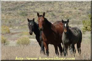 Wyoming Wild Horse