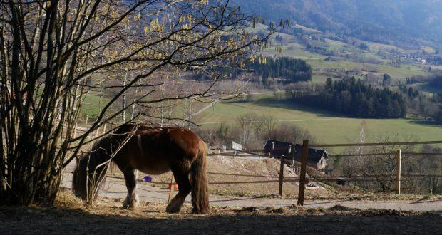 Hébergement en équipiste. Ici Sire, des Chevaux d'Arcand en Haute Savoie