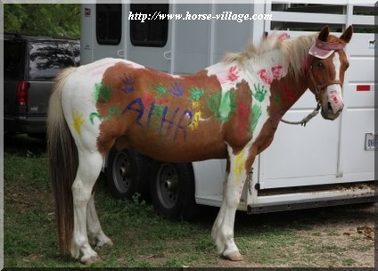 American Indian Horse