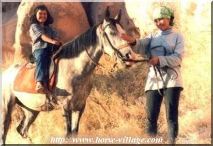 Anatolian Native Pony
