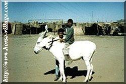 Ane Riffawi (Shindawi , Ane de selle)