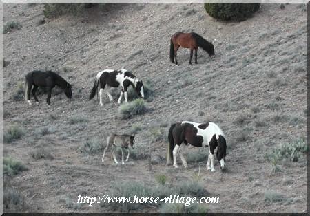 Caja del Rio wild horse