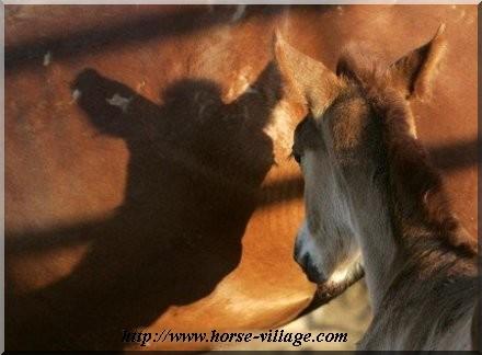 Catnip Mustang
