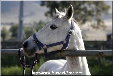 Feral Wild Horse