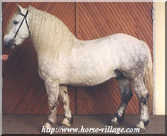 cheval de trait hongrois