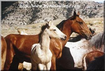 Mustang Bonanza