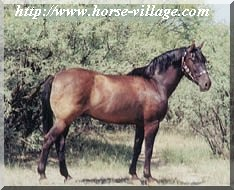 Mustang Brislawn