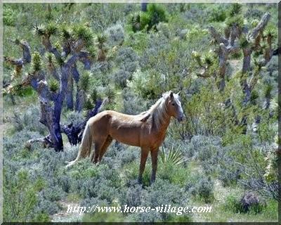 Nevada Wild Horse