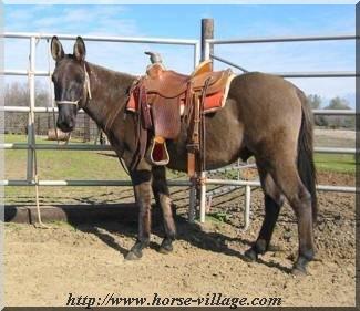 Wild Mustang Mule