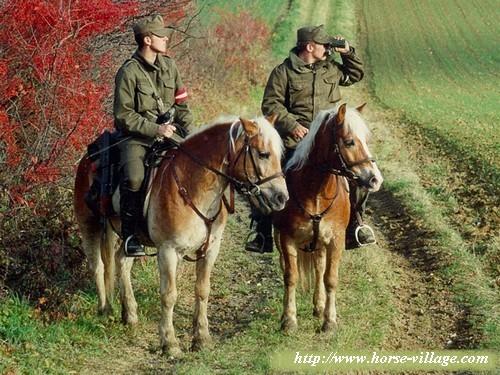 """Résultat de recherche d'images pour """"cheval armée travail"""""""""""